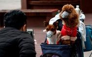 Nhật Bản: Phát hiện 2 chú chó cảnh dương tính với virus SARS-COV-2