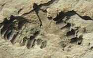 Phát hiện bằng chứng khoa học đầu tiên về sự sống của con người trên Bán đảo Arab