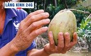 Lăng kính 24g: Ảnh hưởng ngập mặn, người dân xứ dừa lao đao