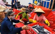 Chủ tịch UBND tỉnh Quảng Ngãi nói gì việc không hỗ trợ người dân lao động tự do?