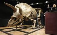 Hóa thạch xương khủng long 3 sừng bán được 7,7 triệu USD
