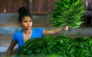 Cuộc chiến phủ lại rừng xanh - Kỳ 3: Chén cơm gắn với rừng