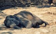 Hành động ngay trước khi voi, tê tê chỉ còn là một ký ức