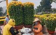 Hoa ế, người bán vẫn tự tin giữ giá, người mua 'canh me' chờ giảm