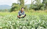 Gần 3 sào dưa hấu chuẩn bị thu hoạch bị cắt, nhổ gốc trong đêm