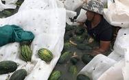 Xe chở dưa hấu bị lật, dân Quảng Bình cùng thu gom và mua luôn giúp tài xế