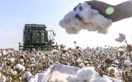 H&M và các công ty đa quốc gia 'tiến thoái lưỡng nan' vì Tân Cương