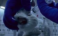 Phim 'Save Ralph' có H'Hen Niê tham gia lên án việc thí nghiệm trên động vật