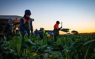 Australia tăng cường tuyển dụng lao động nông nghiệp Đông Nam Á