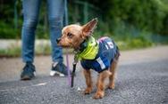 Biệt đội chó cưng ngăn chặn tội phạm ở thành phố Tokyo, Nhật Bản