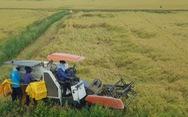 Bộ trưởng Lê Minh Hoan: Giá lúa nhích lên, bộ đang theo sát tình hình