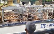 Công an tìm thấy cả chục con hổ được nuôi nhốt trong một nhà dân