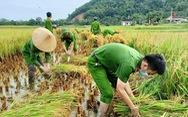 Bộ đội, công an cùng lội ruộng gặt lúa 'chạy bão' số 5 giúp dân