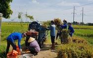 Gần 1.000 đoàn viên, thanh niên giúp dân thu hoạch lúa mùa tránh bão số 5