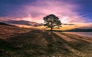 Ngắm đồi cỏ hồng Đà Lạt đẹp như cổ tích