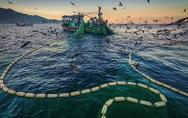 'Vũ điệu ra khơi' ở Hòn Yến mùa săn cá cơm ngần