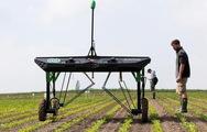 Máy diệt cỏ sử dụng trí tuệ nhân tạo giúp bảo vệ cây trồng