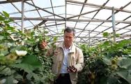 Video: Đà Lạt trồng thành công phúc bồn tử đen cho thu nhập cao