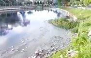 Nước đen đặc, rác nổi lềnh bềnh trên mặt hồ Đội Có ở Đà Lạt