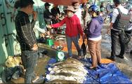 Cá tầm Lâm Đồng ồ ạt bán rẻ bên đường phố Sài Gòn