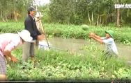 Video: Niềm vui trên những cánh đồng dưa hấu trái mùa