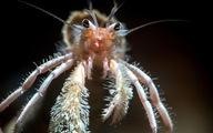 Nghẹt thở sinh vật biển sống động trong Blue Planet II