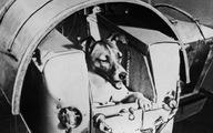 60 năm trước, chó Laika bay vào vũ trụ