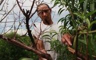 Truy tìm thủ phạm chặt phá gần 500 gốc đào vườn ông Cảnh