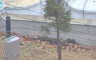 Video: Lính Triều Tiên đào thoát sang biên giới Hàn Quốc