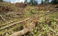 10 năm Việt Nam mất 1,7 triệu ha rừng phòng hộ