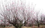 Chơi hoa Tết, chọn những loài hoa phóng khoáng tự nhiên