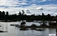 Giao Vườn quốc gia Yok Đôn cho Đắk Lắk quản lý