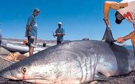 Đông, Tây đều cấm cắt vi cá mập