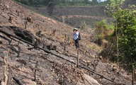 8 ha rừng phòng hộ Quảng Ninh bị chặt trụi trước mặt kiểm lâm