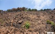 Xử lý nghiêm vụ chặt phá rừng phòng hộ ở Quảng Ninh