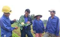 Trồng rau sạch, sống khỏe ở miền Trung
