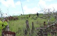 Bắt tạm giam chủ mưu phá hơn 18ha rừng tại Đắk Lắk