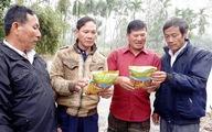Những người tiên phong với lúa sạch