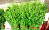 Đặc sản rau su su ở danh thắng Tây Thiên
