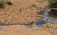 Người dân Tây nguyên lo lắng vì hạn hán, thiếu nước
