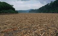 Giao công ty thủy điện gom 'dòng sông gỗ' rộng 100m, dài 500m trong lòng hồ Đăk Mi 4