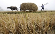 Trung Quốc hạn chế cưới hỏi, ma chay ở nông thôn để phòng COVID-19