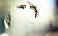 Phát hiện kháng thể ngăn chặn cả 4 chủng virus gây bệnh sốt xuất huyết