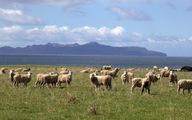 Khám phá Tasmania