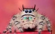 Hình ảnh đáng yêu của những con vật đáng sợ