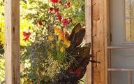 Bí kíp chăm chậu hoa kiểng luôn xanh tươi