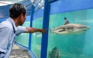 Cá mập vây đen chào đời tại Bảo tàng Hải dương học