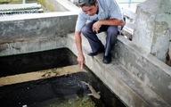 Thêm một cá mập con chết tại Bảo tàng Hải dương học