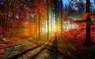 Ngắm cảnh rừng đẹp như tranh