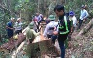 Thủ tướng chỉ đạo Bộ Công an điều tra vụ phá rừng pơmu